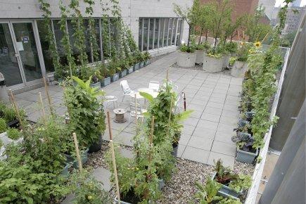 Une pétition pour l'agriculture urbaine à Montréal   Urbanisme   Scoop.it