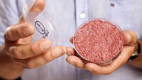 "The World's First Test-Tube Burger Tastes Like ""A Cross Between A Boca Burger And McDonald's"" | UtopianDynamics | Scoop.it"