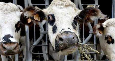 L'élevagepourrait être fortement impacté par le réchauffement climatique | Alimentation Santé Environnement | Scoop.it