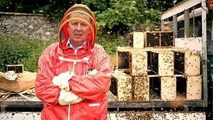 BBC Two - Horizon, 2013-2014, What's Killing Our Bees? A Horizon Special | BBSRC News Coverage | Scoop.it