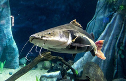 BigFishCampaign.org - Promoting Responsible Fishkeeping   Aquaculture Products & Marketing Network   Scoop.it