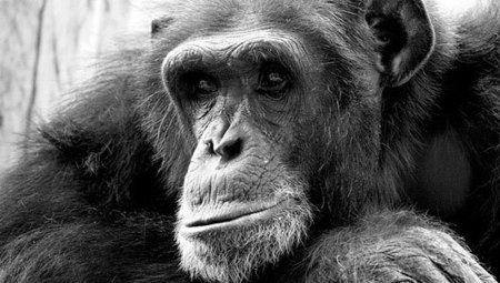 Do animals mourn their dead? | MNN - Mother Nature Network | Second Chance with Saving Grace (SCwSG), Inc. | Scoop.it