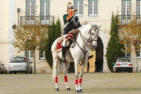 Rei da Jordânia quer comprar cavalos em Portugal - Revista Equitação Online | Portugality | Scoop.it