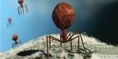 An Ocean of Viruses   The Scientist Magazine®   Aquatic Viruses   Scoop.it