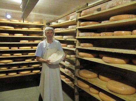 De la tomme de montagne dans le pays d'Auge | The Voice of Cheese | Scoop.it