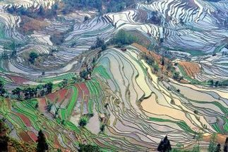 Reis oder Weizen? | Telepolis | Donate - Profit | Scoop.it