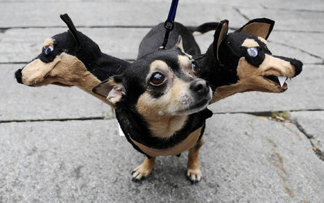 21 Creative and Funny Halloween Costumes For Pets | That's Life! | Scoop.it