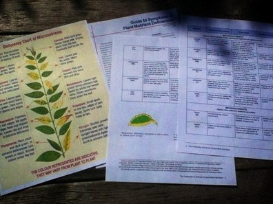 Free printable nutrient deficiency charts for your garden plants | CALS in the News | Scoop.it