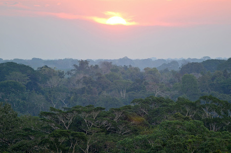 Climate Change: The Next Generation: Amazon carbon sink is in decline as trees die off faster | GarryRogers NatCon News | Scoop.it