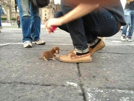 Twitter / EarthPctures: The worlds smallest dog. ... | Depression a Flaw in Chemistry | Scoop.it