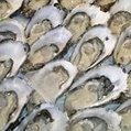 Oyster crop hit by disease | Messenger for mother Earth | Scoop.it