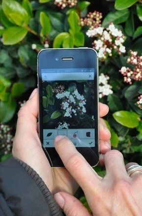 PlantNet : The App That Identifies Plants From A Picture | iScience Teacher | Scoop.it
