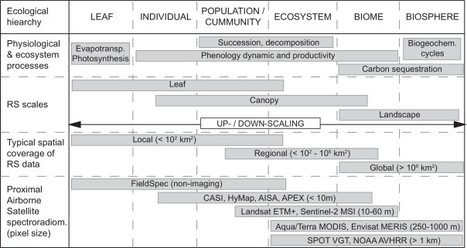 Review of optical-based remote sensing for plant trait mapping | Remote Sensing - Vegetation Classification & Condition | Scoop.it