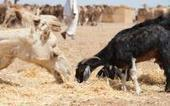 WHO: Humans, animals both likely fueling MERS spread   MERS-CoV   Scoop.it