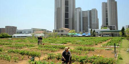 Plus verte la ville | Les colocs du jardin | Scoop.it