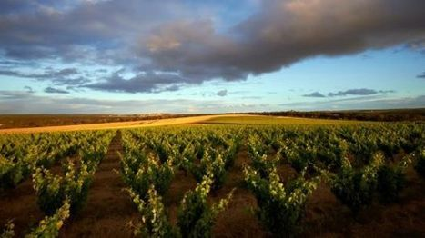 How this WA winery is using drones and geology to create perfect drops | Wine from Down Under | Scoop.it
