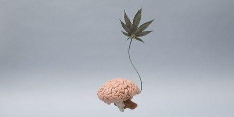 Cannabis chez les adolescents : le QI part en fumée | Culture générale pour concours et examens | Scoop.it