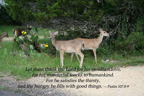 """Psalm 107.8-9 Poster - """"Let them thank the Lord for his steadfast love, for his wonderful worksto humankind."""" 