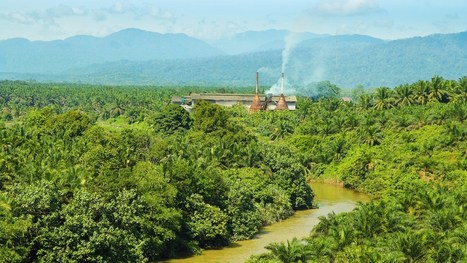 48 hours that changed the future of rainforests | Rainforests - Global environments | Scoop.it