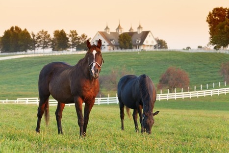 What You Need to Know about Equine Liability Insurance | Equine Law | Scoop.it