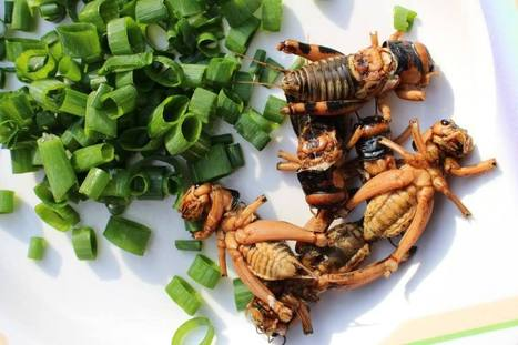 The MADFeed   EDIBLE INSECTS   Scoop.it