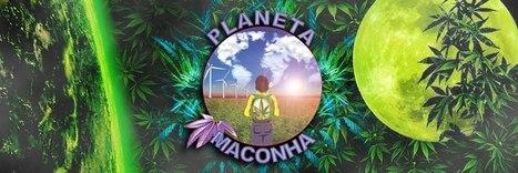 Planeta Maconha: Confira 11 argumentos para a legalização da Maconha | A culpa é de quem? | Scoop.it