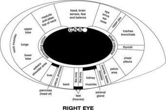 Equine Iridology – A Window To Your Horse's Health | Horse Health | Scoop.it