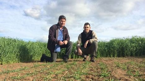 Pasture genebank embraces Tasmania's collection of temperate seeds - ABC Online | Agricultural Biodiversity | Scoop.it