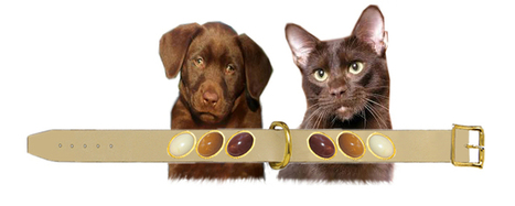 Designer Color-Coordinates Pets accessories- Custom made leather dog collars - Couture Accessories | Collars | Scoop.it