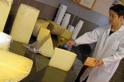 Laguiole AOP : un fromage en quête d'excellence | thevoiceofcheese | Scoop.it