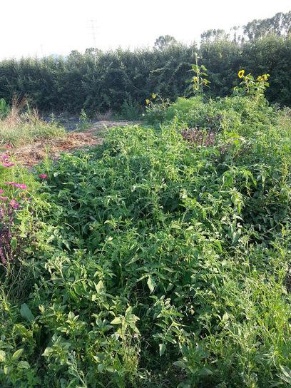 Jardineria Natural. Un Jardí per Menjar-se'l.: El Hort Al Agost | EL RACÓ DE LA JARDINERIA | Scoop.it