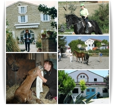 Successful stories of expats in Le Marche | A couple and Sant'Ippolito's horses in The Marches | Le Marche another Italy | Scoop.it