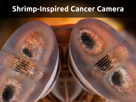 Shrimp-Inspired Cancer Camera | IT Support and Hardware for Clinics | Scoop.it