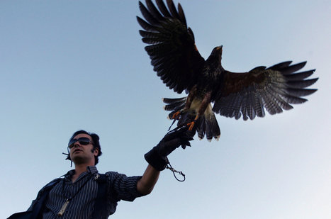 Pest Control in the Sky, Courtesy of a Raptor | Pest & Rodent Control | Scoop.it