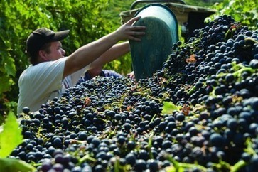 The undiscovered Sangiovese: Marche | Wines and People | Scoop.it