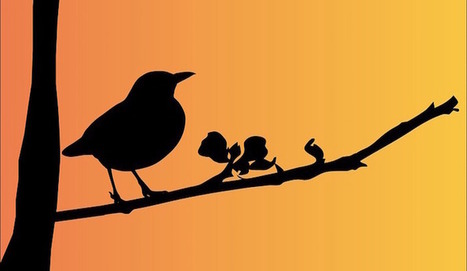 Which Moodle Plugins Earned The Early Bird Award For 3.1? | Moodled | Scoop.it