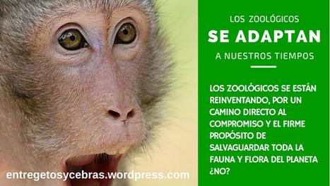 El Zoo se adapta a nuestros tiempos | Enriquecimiento ambiental en animales en cautividad y mascotas. | Scoop.it