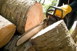 Marc St. Laurent Complete Tree Service provides excellent tree services. | Marc St. Laurent Complete Tree Service | Scoop.it