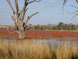 Environmental Contaminants stream | CSIRO | Water Quality | Scoop.it