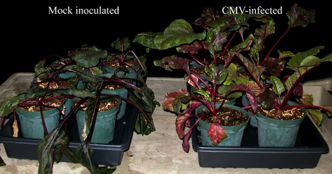 PLOS Pathogens: Plant Virus Ecology (2013) | plant cell genetics | Scoop.it