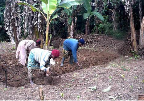 Cameroun: Comment l'agriculture urbaine nourrit Yaoundé | Agriculture urbaine et rooftop | Scoop.it