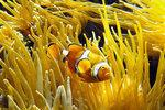 De nouvelles espèces en eau salée - Europe1 | Nature & Civilization | Scoop.it