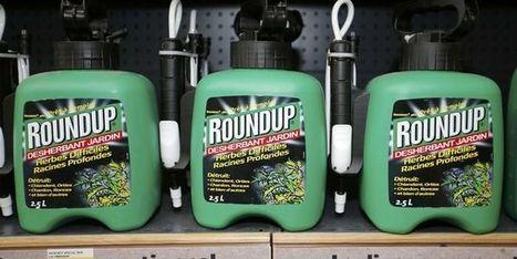 Roundup: le risque cancérogène du glyphosate jugé «improbable» par une autorité européenne | Revue de presse professionnelle | Scoop.it