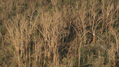 Bid to rebuild rainforest after Yasi | Courier Mail | Geography | Scoop.it