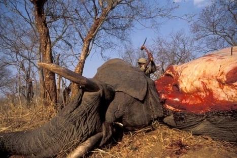 El multimillonario negocio de la caza ilegal | Derecho&Política Internacional&Globalización | Scoop.it