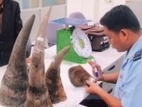 7 rhino horns seized at Hanoi's Noi Bai airport | What's Happening to Africa's Rhino? | Scoop.it