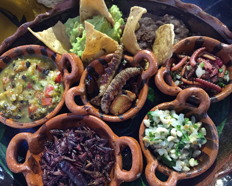 The Pre-hispanic all bug tasting at the re-vamped Casa de los Tacos GOODFOODMEXICOCITY | Entomophagy: Edible Insects and the Future of Food | Scoop.it