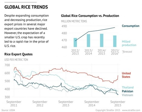 China: A Growing Appetite for U.S. Rice? - Stratfor (2015) | Ag Biotech News | Scoop.it