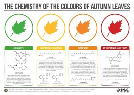 The Chemicals Behind the Colours of Autumn Leaves | Tree News | Scoop.it