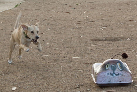 High Tech Toy Lets Owners Skip The Ball Throwing | Interactive Dog Toys | Scoop.it